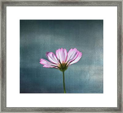 Cosmos - Summer Love Framed Print by Kim Hojnacki