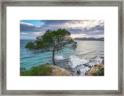 Costa De La Calma Tree Framed Print