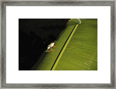 Costa Rica Red Eye Frog II Framed Print