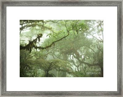 Costa Rican Cloud Forest Framed Print