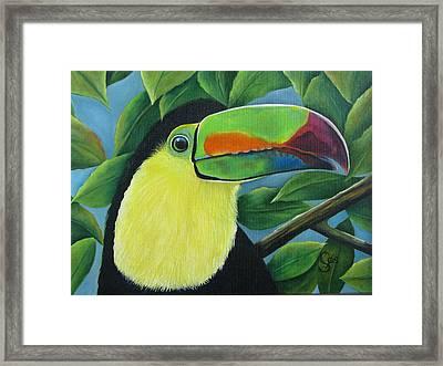 Costa Rican Toucan Framed Print by Shirley C Checkos