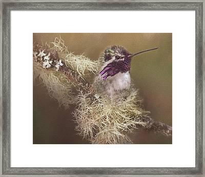 Costas Hummingbird Painted Framed Print
