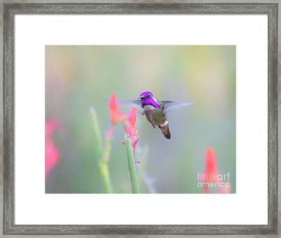Costa's On Approach Framed Print