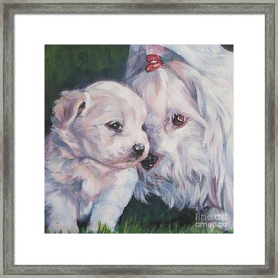 Coton De Tulear With Pup Framed Print by Lee Ann Shepard