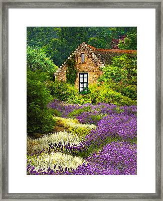 Cottage Amidst The Lavender Framed Print
