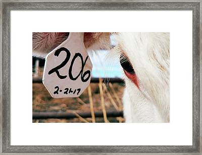 Cottage Cheese Framed Print