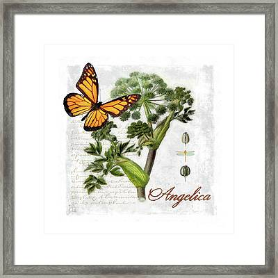 Cottage Style Angelica Herb Butterfly Botanical Illustration Framed Print by Tina Lavoie