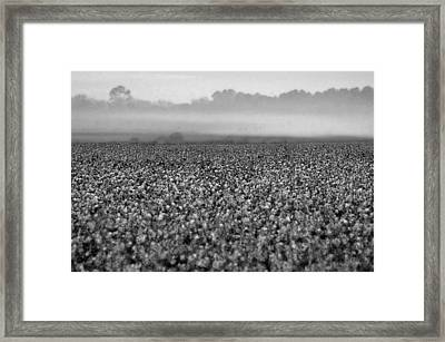 Cotton And Fog Framed Print by Michael Thomas