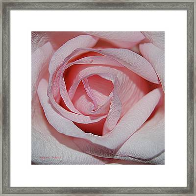 Cotton Candy Rose Framed Print by DigiArt Diaries by Vicky B Fuller