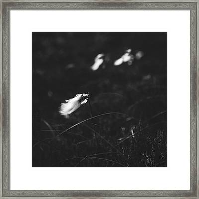 Cotton Framed Print