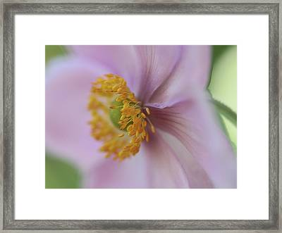 Cotton Floss Framed Print by Connie Handscomb