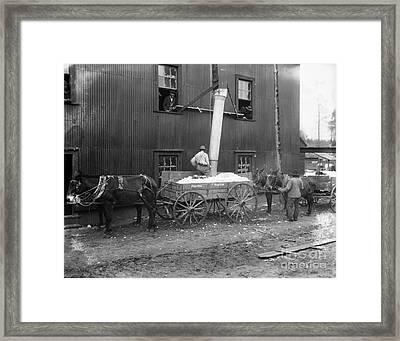 Cotton Ginning, 1902 Framed Print by Granger