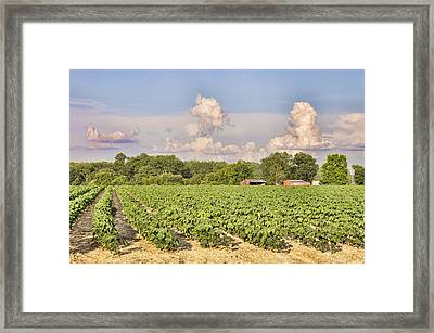 Framed Print featuring the photograph Cotton Hasn't Flowered Yet by Jan Amiss Photography