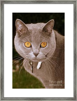 Cotton Framed Print by Michael Canning