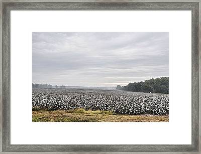 Framed Print featuring the photograph Cotton Under The Mist by Jan Amiss Photography