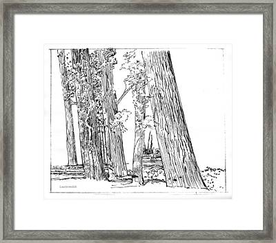 Cotton Woods Creve Coeur Path Framed Print