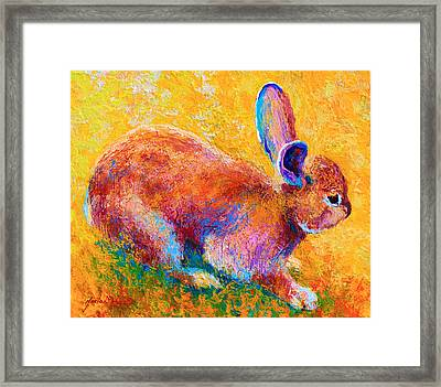 Cottontail II Framed Print by Marion Rose