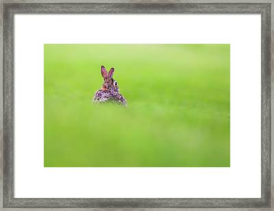 Cottontail In Green Framed Print