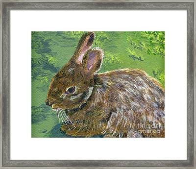 Cottontail Framed Print by Lynne Reichhart