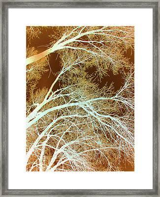 Cottonwood Conflux Framed Print