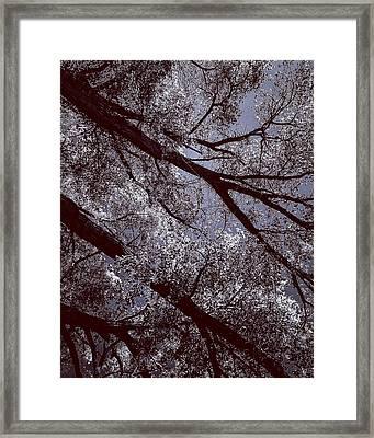 Cottonwood Energies Framed Print