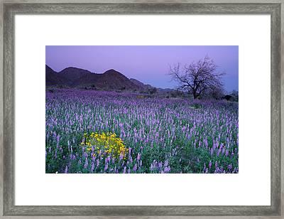 Cottonwood Framed Print by Eric Foltz