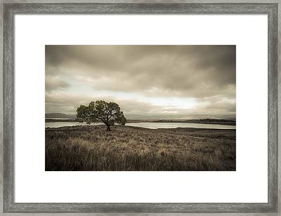 Cottonwood In October Framed Print