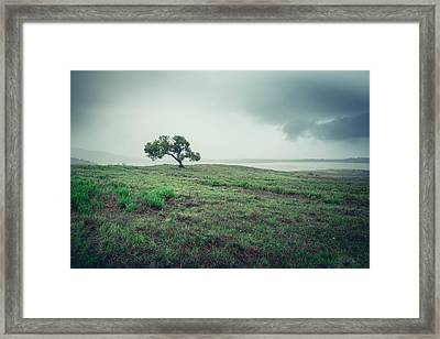 Framed Print featuring the photograph Cottonwood In October Storm by Alexander Kunz