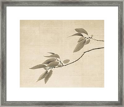 Cottonwood Leaves Framed Print