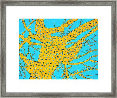 Cottonwood Seven Sea Invertebrate Framed Print by Ray  Petersen