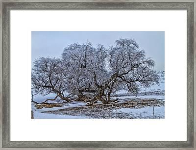 Cottonwood Sprawl Framed Print