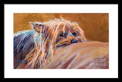 Silky Terrier Framed Prints