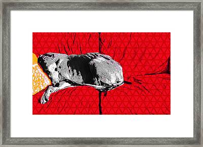 Couch Rest Framed Print