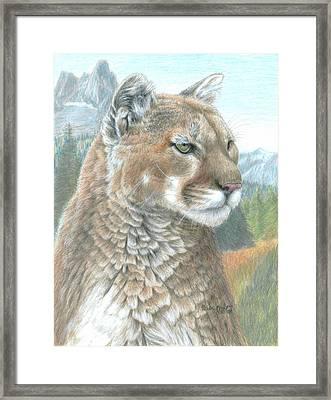 Cougar 2 Framed Print