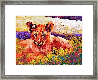 Cougar Cub Framed Print by Marion Rose