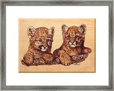 Cougar Cubs Framed Print by Ron Haist