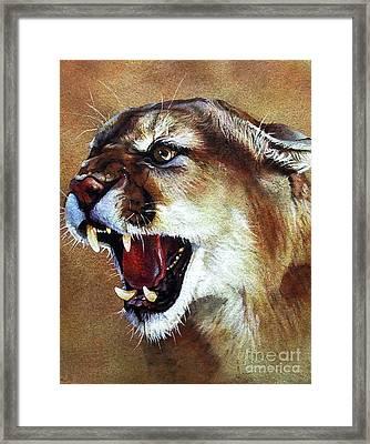 Cougar Framed Print by J W Baker