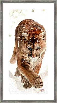 Cougar In The Snow Framed Print by James Shepherd