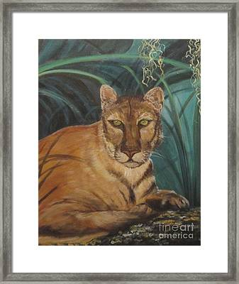Cougar Framed Print by Kimberly Witz