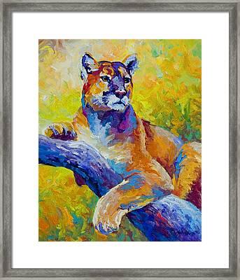 Cougar Portrait I Framed Print by Marion Rose