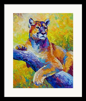 Mountain Lion Paintings Framed Prints