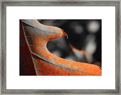 Cougar Rusty Leaf Detail Framed Print