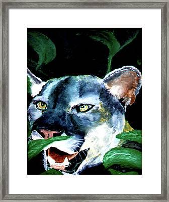 Cougar Framed Print by Stan Hamilton