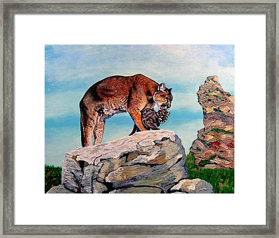 Cougars Framed Print by Stan Hamilton