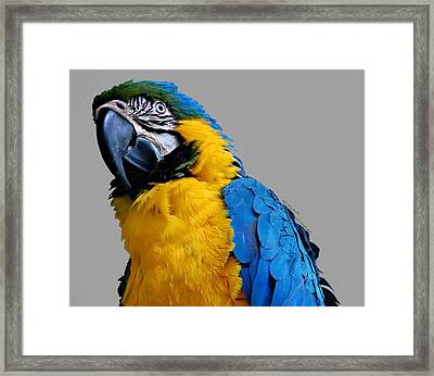 Could I Look Any Better Framed Print by DigiArt Diaries by Vicky B Fuller