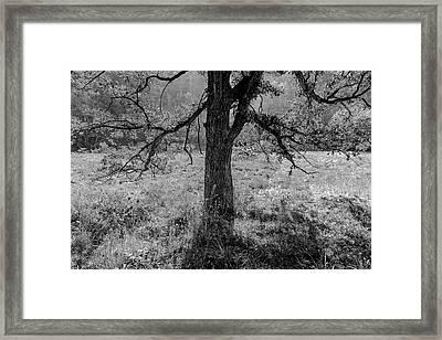 Coulee Oak Framed Print