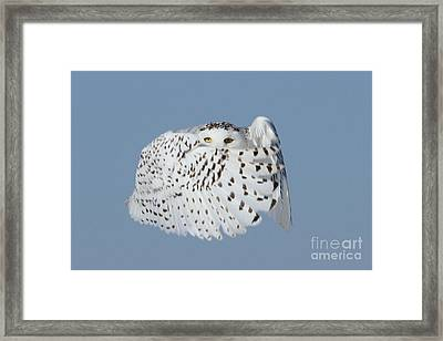 Countess Snowy Framed Print