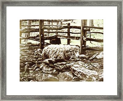 Counting Sheep Framed Print by JAMART Photography
