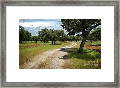 Countriside Trail Framed Print by Carlos Caetano