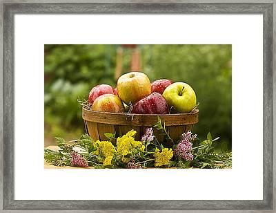 Country Basket Of Apples Framed Print